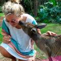 Meet Josie our kangaroo at Basecamp