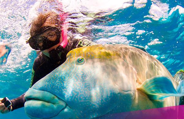 Aussie-adventure---Great-barrier-reef