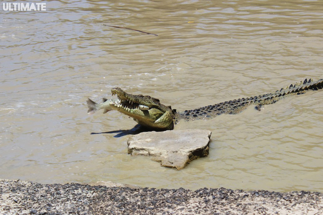 Croc at Australia's Northern Territory