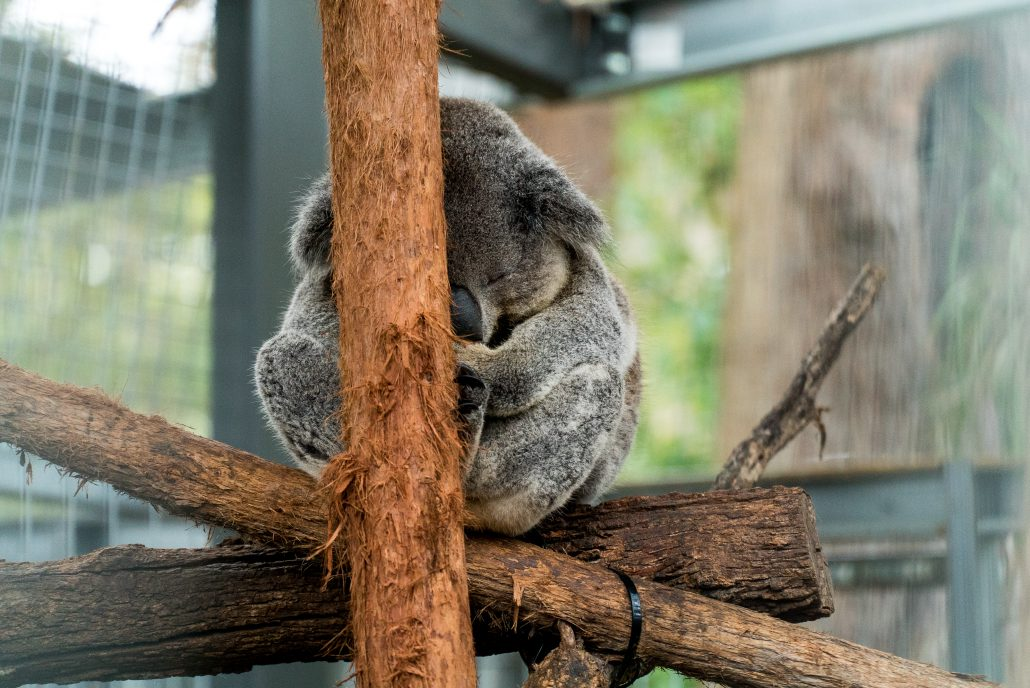 Australia has some cute wildlife | Ultimate Travel