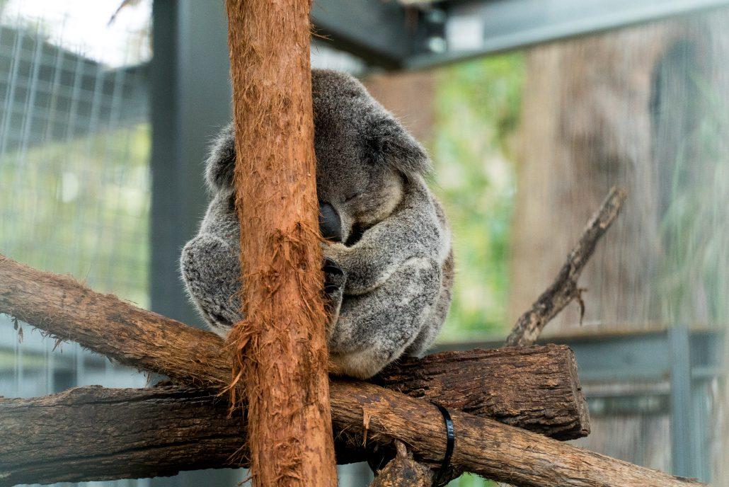 Australia has some cute wildlife | Ultimate Travel