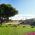 South Africa Adventure