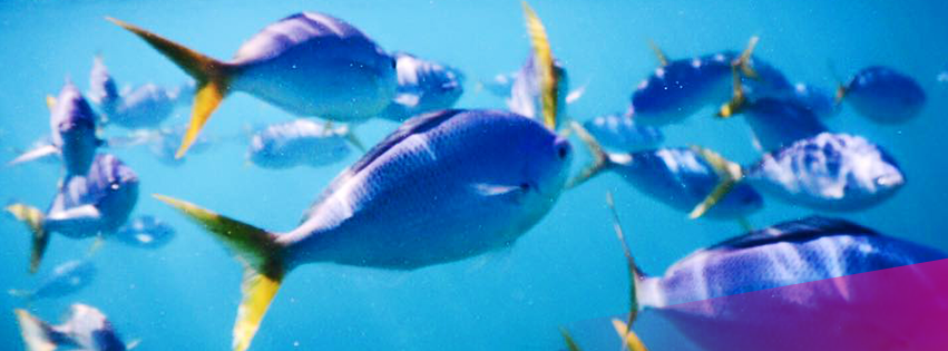 The Great Barrier Reef: What's the best way to experience it?