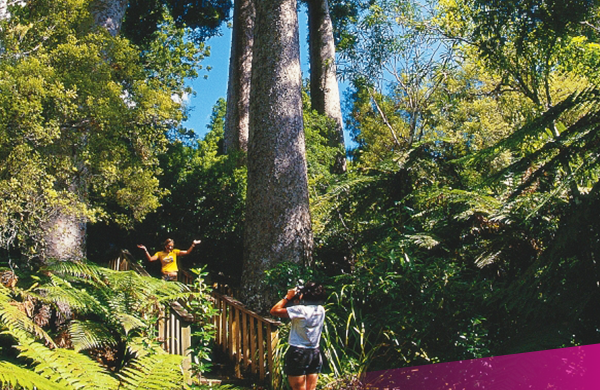 Backpackers exploring Kauri Forest