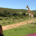 Meet the wildlife on our South Africa Adventure