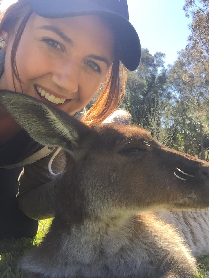 UltimateOz resident kangaroo, Josie