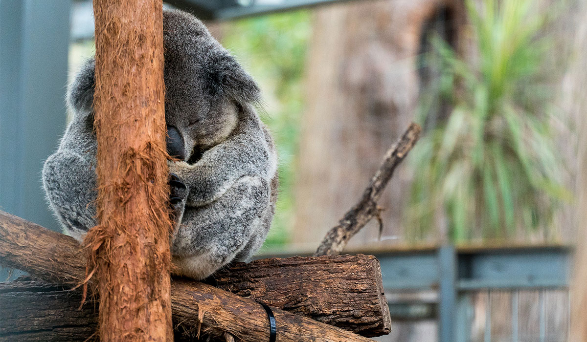What NOT To Do On Your Gap Year In Australia