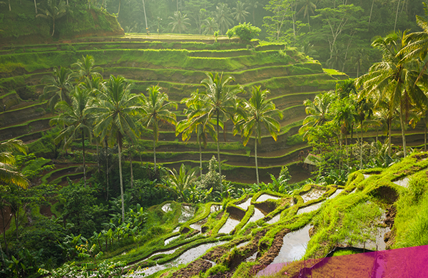 Rice Terraces, Ultimate Bali