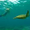 Snorkel the Great Barrier Reef on Ultimate East Coast: 5 Week
