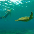 Snorkel the Great Barrier Reef on Ultimate East Coast: 5 Week