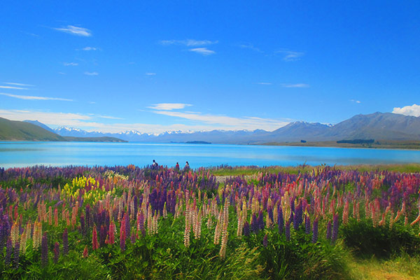 DAY 9 – 10  LAKE TEKAPO & CHRISTCHURCH