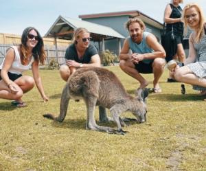 Ultimate Melbourne Kangaroo