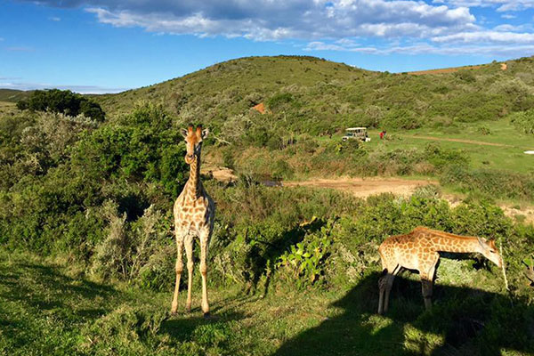 South Africa Adventure - Day 3