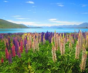 NZ National - Tekapo