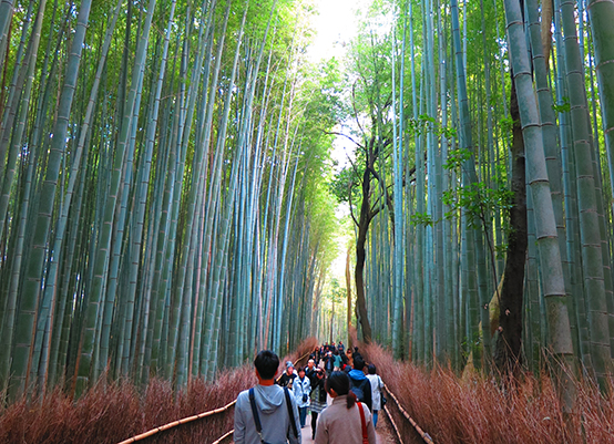 DAY 9  BAMBOO FOREST AND OSAKA