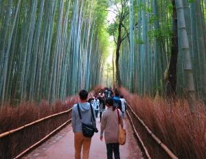 Japan Group Adventure Bamboo Forrest Media Grid