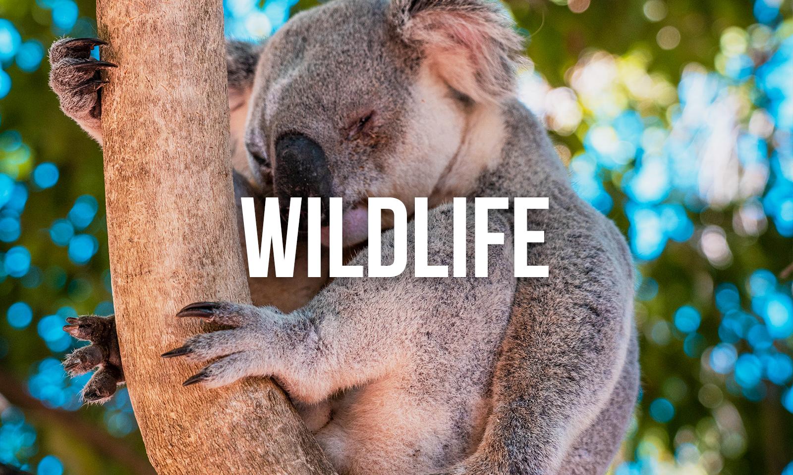 Responsilbe Travel Ultimate Adventure Travel Wildlife