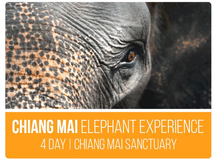 Southeast Asia Tours Chiang Mai Experience